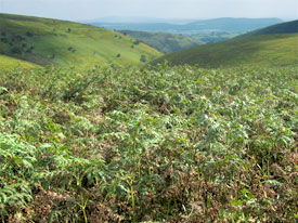summer on the long mynd